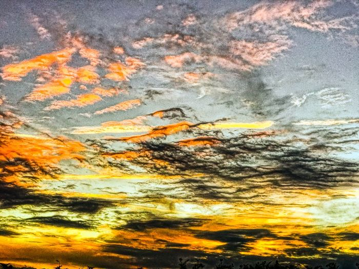 Sunset leaving silhouettes and clouds giving the impression of moving at speed across the sky. Check This Out EyeEmBestPics Popular Photos EyeEm Best Shots EyeEm Nature Lover EyeEmNewHere Blue Sky Speed Sunset #sun #clouds #skylovers #sky #nature #beautifulinnature #naturalbeauty #photography #landscape Sunset Silhouettes Sunset_collection Clouds Motion Orange Color Nature Cloud - Sky Dramatic Sky Sunset Beauty In Nature Sky Yellow Abstract Scenics Backgrounds Tranquility Low Angle View No People Outdoors Multi Colored Day