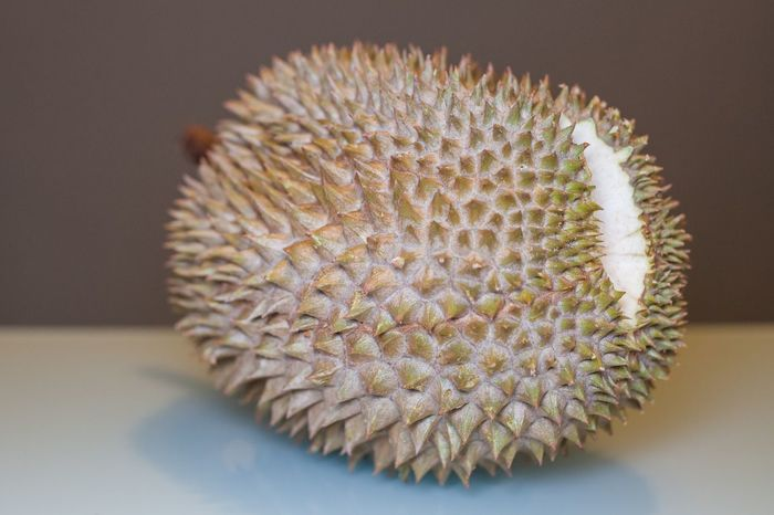 King of Fruit, Durian with aqua and dark grey background for food photography Close-up Day Durian Durian Fruit Durians Food Freshness Indoors  King Nature No People Yellow