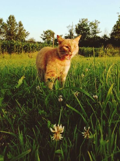 View of cat on field