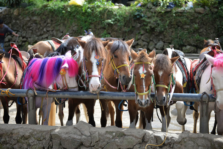 View of tied up horses