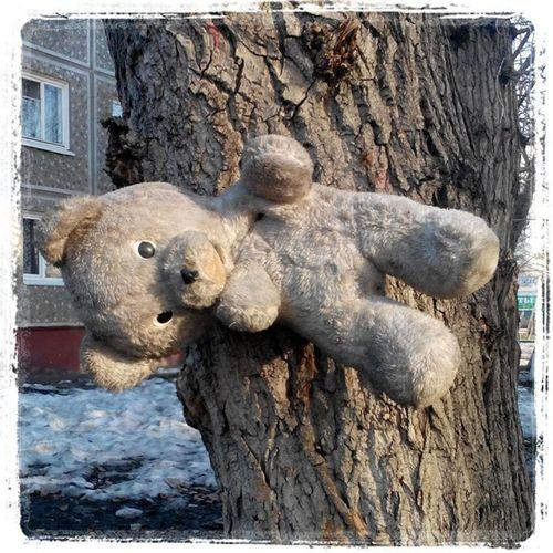 Продолжение истории о прибитых к деревьям жирафе, поросенке и медведе. омск сибирь приколынашегогородка голгофа медведь прибили к дереву садюги Bear Nail ti Tree Omsk Siberia Calvary Sadism