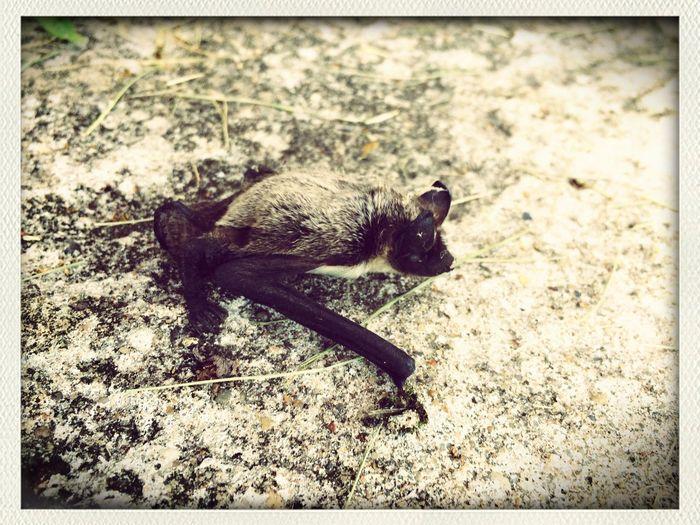 Летучая мышка)) Hi!