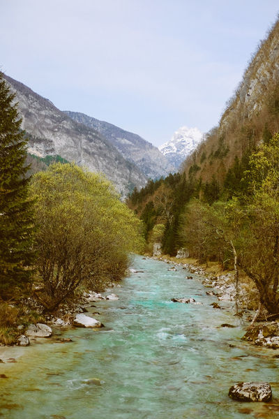 River and nature with mountain in the background Beauty In Nature Day Forest Grass Landscape Mountain Mountain Range Nature No People Outdoors Plant Scenics Sky Snow The Way Forward Tranquil Scene Tranquility Tree Water