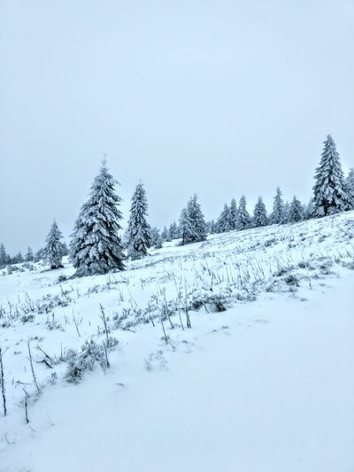 Snow Cold Temperature Winter Mountain Nature Forest Pine Tree Tranquil Scene Frozen Landscape No People Beauty In Nature Snowing Špindlerův Mlýn Medvedin Spindlermühle Czech Republic Scenics Views Mountains Hiking Wintertime Nature Beauty In Nature Cold