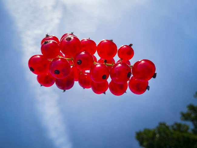 Berries Beauty In Nature Blue Close-up Cloud - Sky Day Food Food And Drink Freshness Fruit Low Angle View Nature No People Outdoors Red Red Currant Sky Tree The Week on EyeEm Editors Picks The Week Of Eyeem Flying