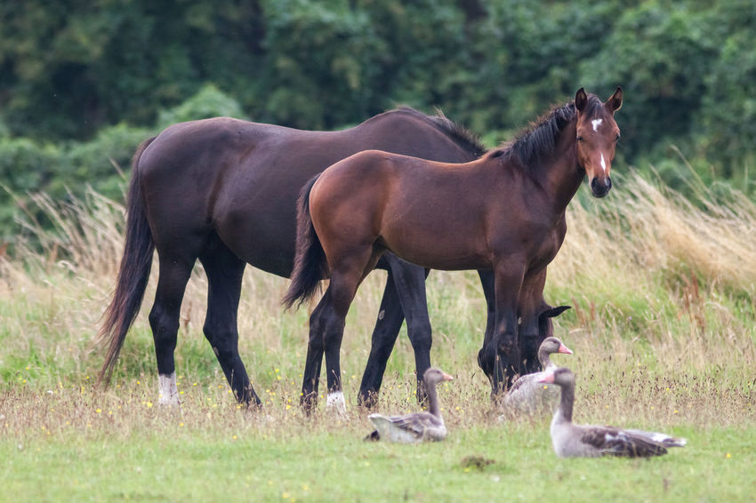 Pferde an der Müritz Horses In A Paddock Animal Animal Photography Animal Themes Animal Wildlife Animals Animals In The Wild Beauty In Nature Free Living Horses Horse Horse Photography  Horses Nature Nature Photography Pferde Pferde An Der Müritz Pferdebilder Pferdekoppel Pferdeliebe Pferde♡ Wild Wildlife Wildlife & Nature Wildlife Photography