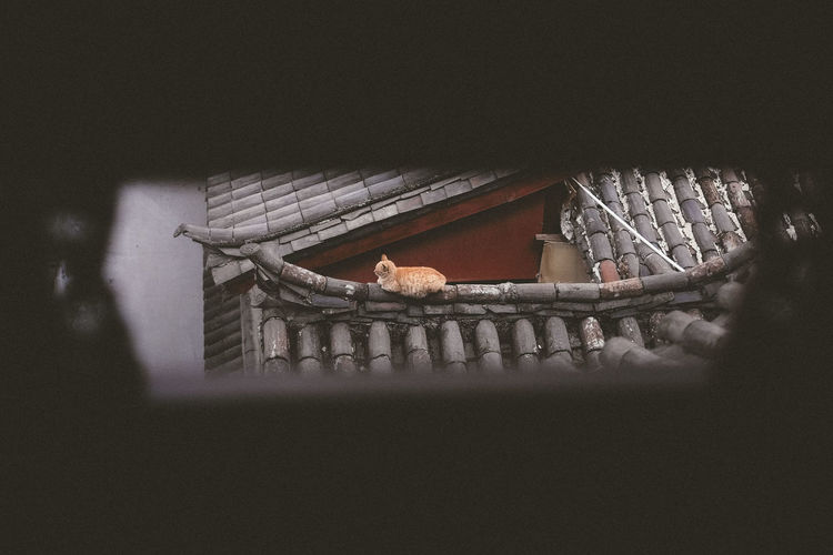 Traditional Building With Cat On Roof