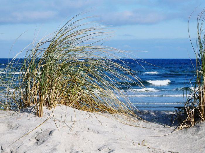 Auch im Winter ist der Strand schön und läd bei diesem Wetter zu einem Spaziergang ein. Kiel Germany Water Wave Sea Beach Sand Sky Horizon Over Water Cloud - Sky Coastline Ocean Coast Seashore Sandy Beach