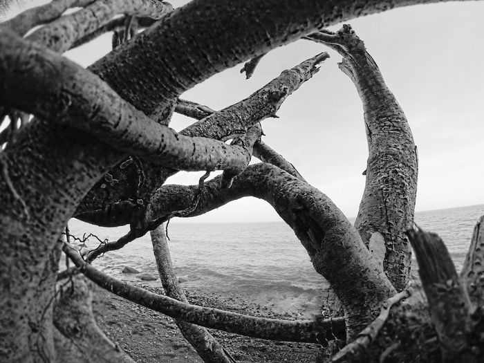Germany Sea Wood Focus Blackandwhite