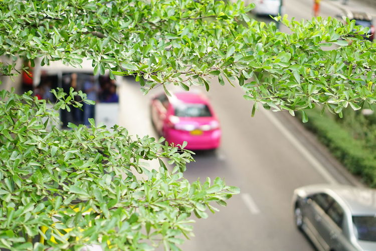 Green Road Road Green Leaves Nature In The City Car Plant Transportation Day Land Vehicle Outdoors Nature No People Flower Greenhouse Water Freshness
