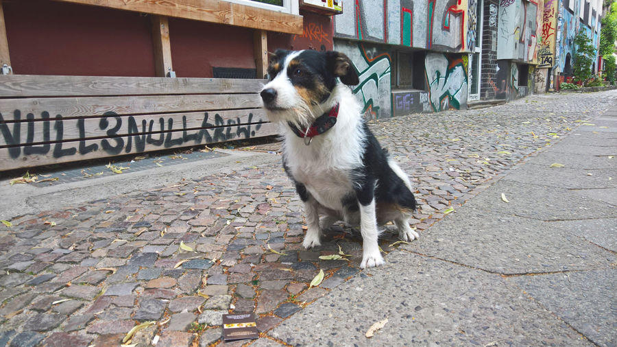 030 Animal Themes Berlin Photography Berliner Ansichten Building Exterior Day Dog Dog Love Domestic Animals Kreuzberg Lifestyle Looking Looking Into The Future No People One Animal Outdoors Pets Sidewalk Urban Vision Visionary Strassenfilm
