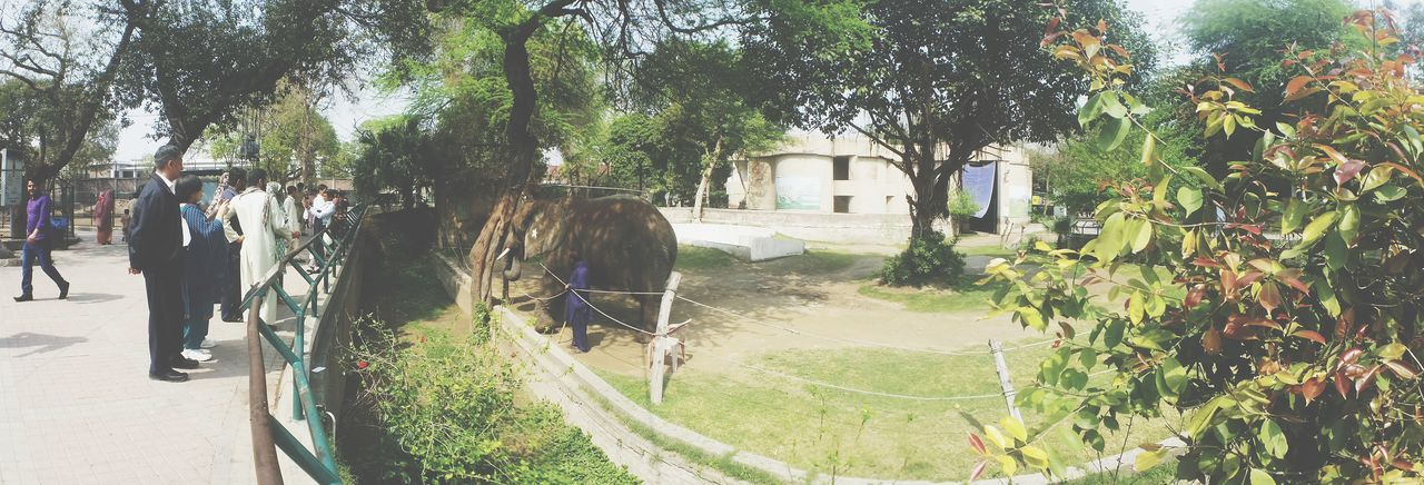 Pakistan Lahore Zoo Elephant People Holiday Panorama Outdoors Hot Day Sunny Awesome Wide Shot