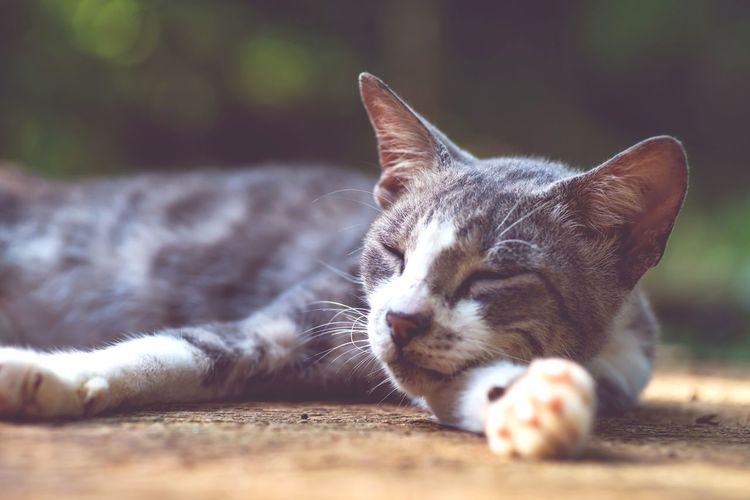 Close-up of cat resting