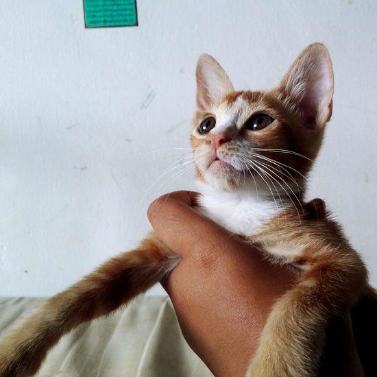 Pet Portraits EyeEm Selects Kitten Whisker Cute Animal Pets Feline Portrait Cats