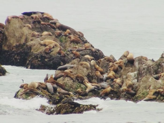 17-Mile Drive Sealions? They Were Supposed To Be Birds! Check This Out Hanging Out Outdoor Pictures Enjoying Life