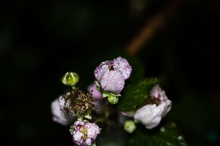 Water Droplets Beauty In Nature Close-up Condensation Day Droplet Flower Flower Head Focus On Foreground Fragility Freshness Growth Nature No People Outdoors Plant Water Wet