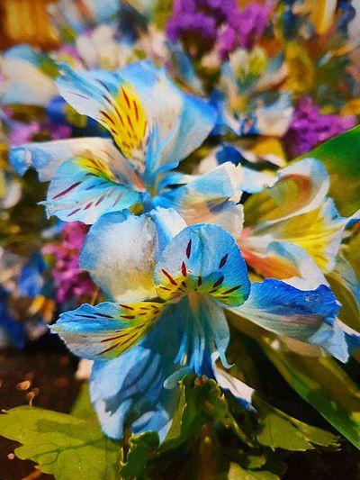 Blue Blossom Blue Flower Flowers