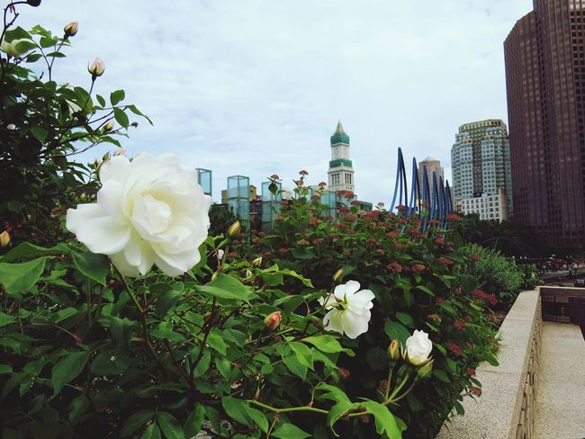 One of my favorite places to be 🌹🌁 Boston OutWithGirls Perf