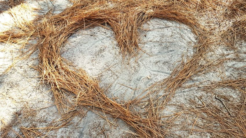 Pine needles LOVE Heart Shape