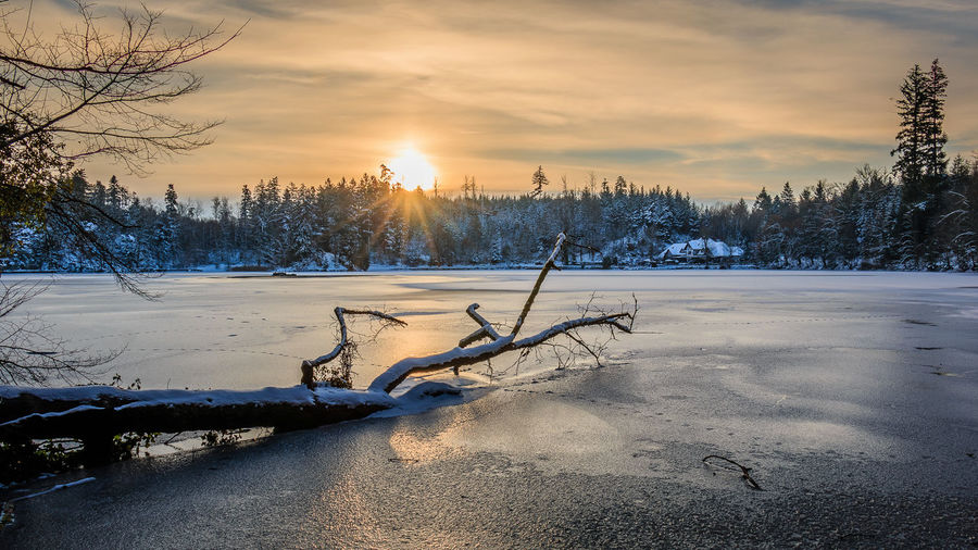Ein Wintermorgen am Bergsee, Januar 2017. Bare Tree Beauty In Nature Cloud - Sky Cold Cold Temperature Frozen Frozen Lake Ice Landscape Morning Nature No People Outdoors Sky Snow Sunrise Tree Weather Winter