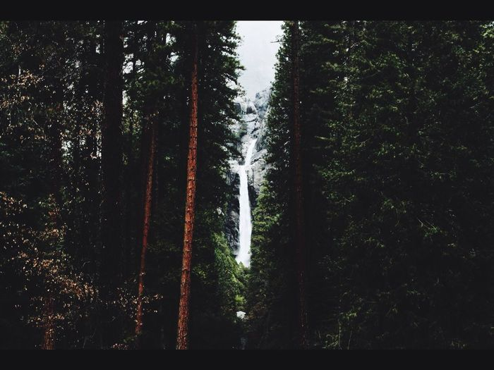 One Woman Only Tree Forest Nature No People Motion Growth Tranquil Scene Outdoors Scenics Water Beauty In Nature Tranquility Night Sky Adult Internet Information Medium VSCO Cam