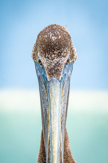Close-up of a bird against the sky
