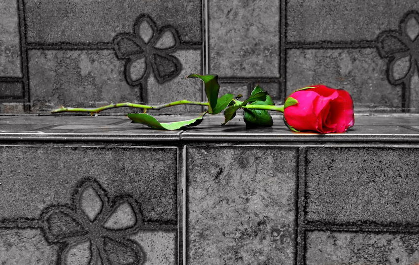 Black And White Photography EyeEmNewHere Fall In Love Flower Flower Head Flowers Grave Graveyard Love Married Mourn Outdoors Plant Rest In Peace Rest In Place Rip Romantic Rose Flower Rose🌹 Sharp Staircase Stairway Surprise Valentine Valentine's Day