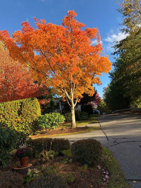 New England autumn color . Autumn Plant Tree Nature Orange Color Beauty In Nature