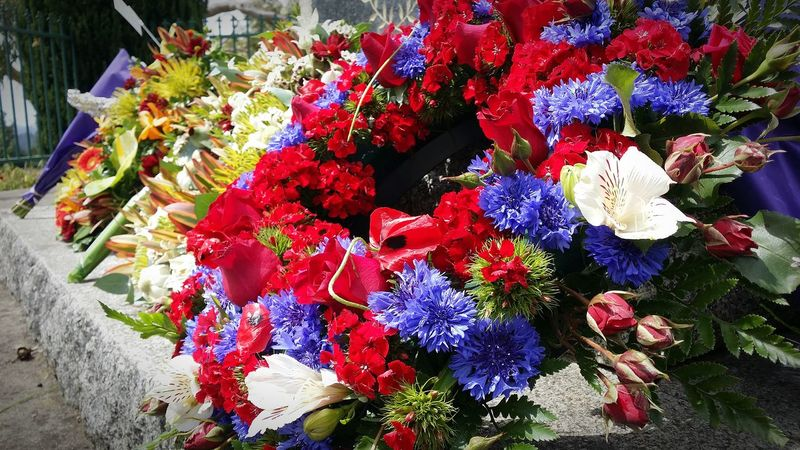 Melbourne Rocks Photography Flowers Remeberance Day Wreath Red Poppy War Monument Cenotaph 11/11/15