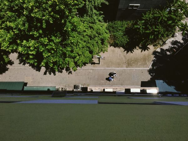 Tree Architecture Growth Skateboard Day Outdoors Sport Nature One Person Skateboard Park Built Structure Building Exterior Real People Court People