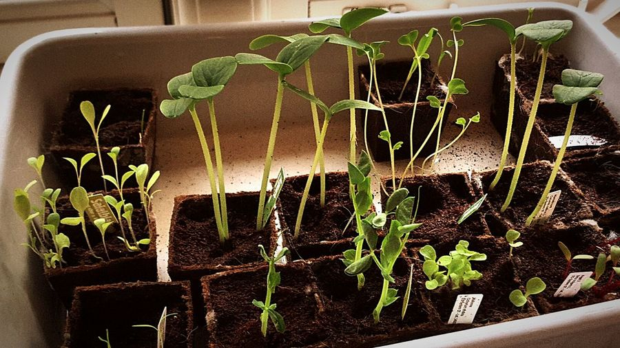 Beuty Of Nature Growing Up Loveit Green World Vagetables Baby Plants Start Living