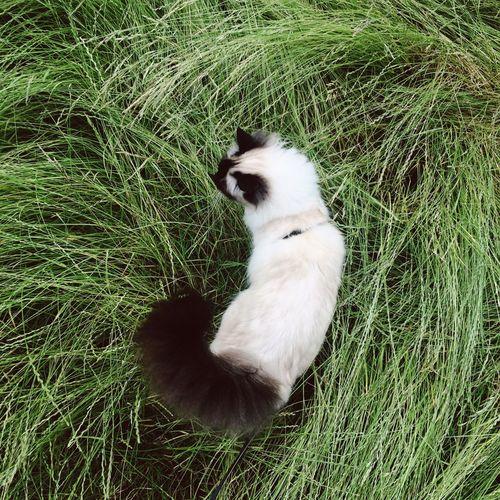 Animal grazing on grassy field