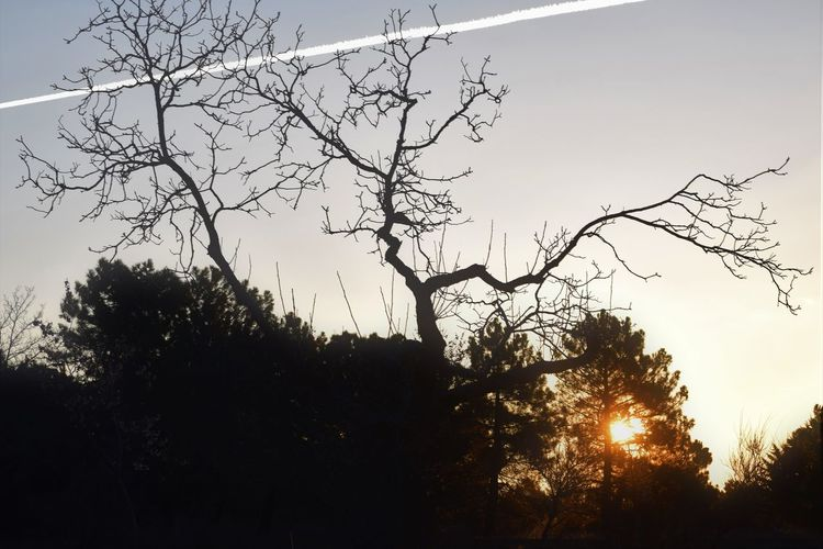 Bare Tree Beauty In Nature Branch Day Growth Landscape Low Angle View Nature No People Outdoors Scenics Silhouette Sky Sunset Tranquil Scene Tranquility Tree