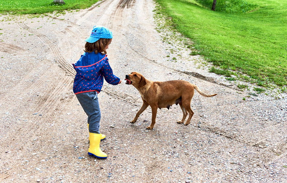 Little girl feeds a homeless dog 5 Years Old Alone Animal Beautiful Care Caress Caucasian Child Compassionate Dog Eating Feed  Friendship Homeless Dog Kid Little Girl Lost Mongrel Outdoors People Sausage Small Girl Stray Dog Summer Vagabond