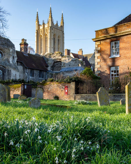 Snowdrops behind the cathedral, Bury St Edmunds, Suffolk, UK Snowdrops White Cathedral Building Exterior Architecture Built Structure Building Place Of Worship Grass Religion Nature Spirituality Spire  Outdoors February 2016 Afternoon Sunshine Snowdrops