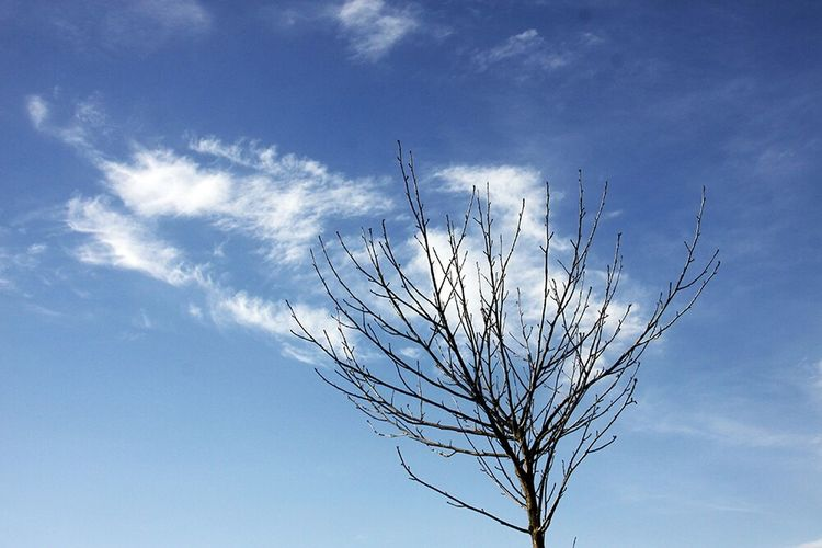 Tree Sky Cloud Clouds And Sky Blue Sky Iran♥ Relaxing Good Afternoon! Jangle Amol