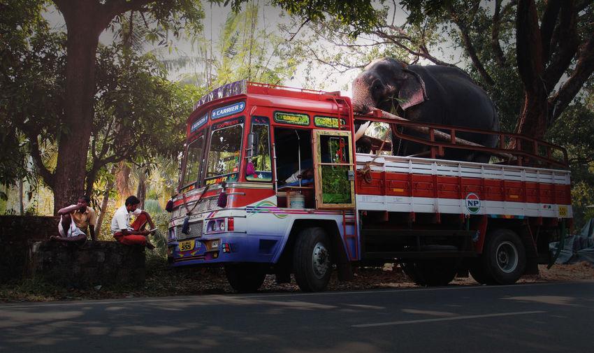 Elephant Lorry Transportation Kerala India Outdoors Rural Scene