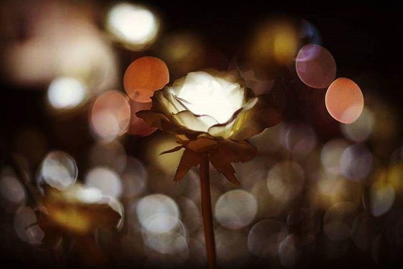 Seoul Seoul Korea Southkorea LED Roses Architecture Lighting Ledroses Ledlighting Environment Garden Ledgarden Romantic Love Flowers Design Designplaza Seouldesignplaza Seoul_korea Seoulsecret Dongdaemun DongdaemunDesignPlaza Dongdaemunmarket