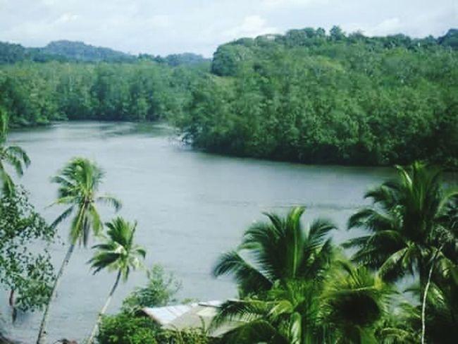 Paz, y calma en Mayorquin , Buenaventura Tree Nature Water Outdoors Scenics Forest No People Sky Day