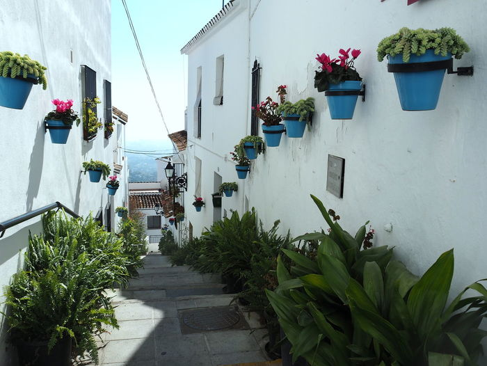 Plant Building Exterior Architecture Built Structure Potted Plant Nature Building Flowering Plant Flower Day White Color Residential District Direction House Outdoors Footpath The Way Forward Narrow Staircase No People Flower Pot Alley Mijas Pueblo Mijas SPAIN