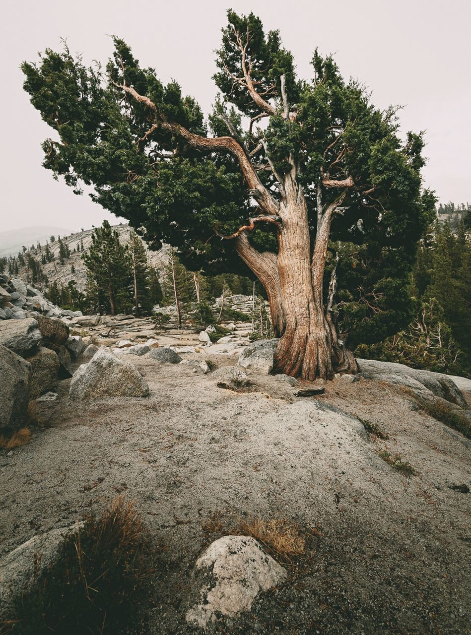 Trees Growing On Rocky Mountain Against Clear Sky
