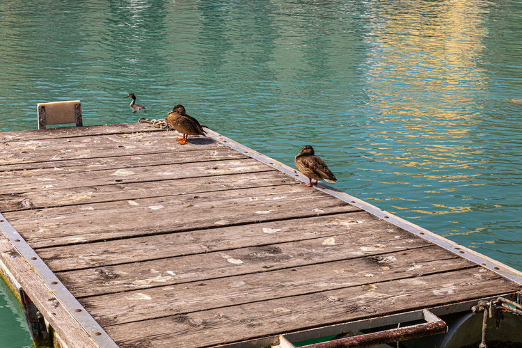 High angle view of bird perching on pier over lake
