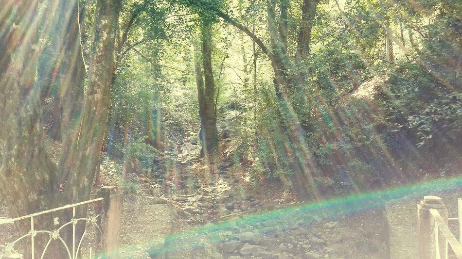 Taking Photos Natural Sun ☀ Trees Nature Ways And Ways