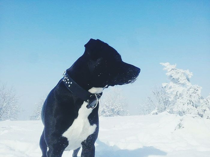 Taking Photos Hi! Check This Out Snow Pitbull Doggy