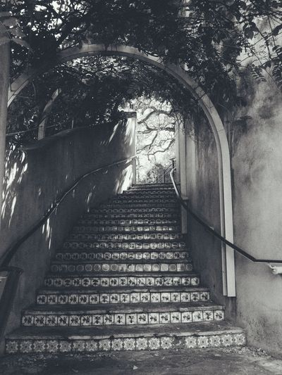 Steps And Staircases Staircase Steps The Way Forward Arch Low Angle View Architecture Built Structure Indoors  No People Day Tree Hand Rail