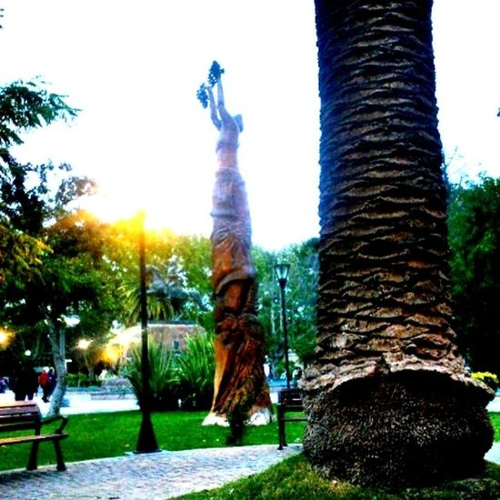 Plaza Sanmartin Sanrafael Mendoza Tarde