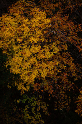 High angle view of yellow flowers on tree