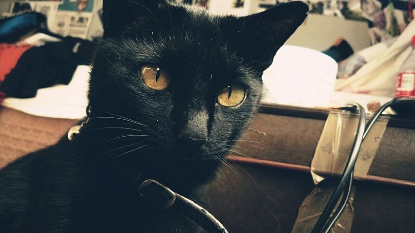 Grunge cat so grunge. Pets One Animal Domestic Cat Animal Themes Feline Close-up No People Whisker Indoors  Photography Grunge Sentimental Cat Blackcats Grungegirl Home Home Is Where The Cat Is