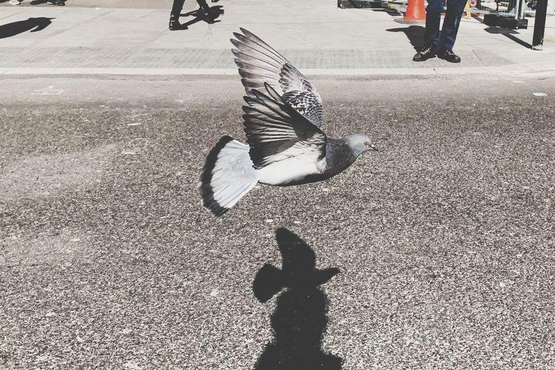 Untitled Streetwise Photography My Best Photo The Art Of Street Photography The Mobile Photographer - 2019 EyeEm Awards