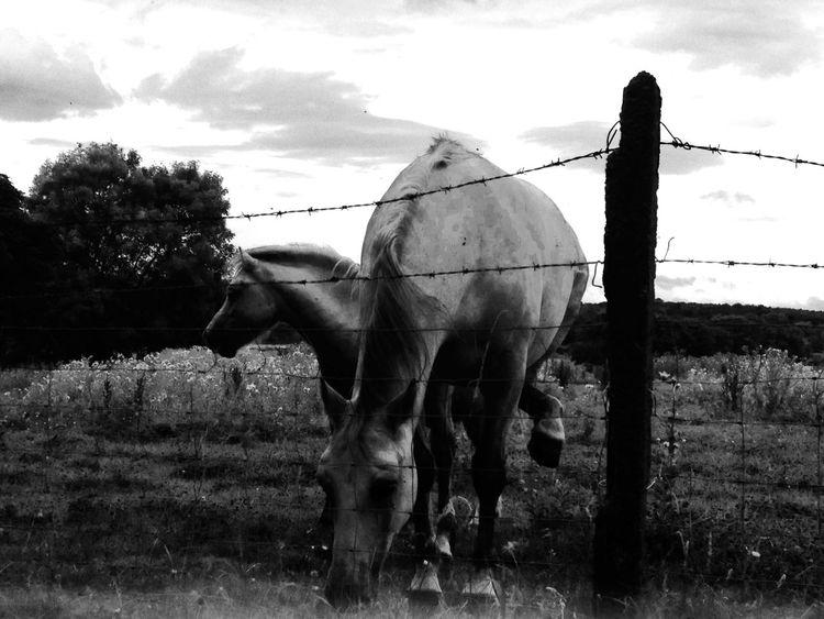 Animals Horse Outdoors England Wentworth Hiking Photography